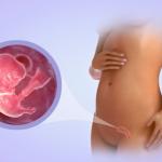 Какие изменения происходят с женским организмом и строением плода на шестой неделе беременности